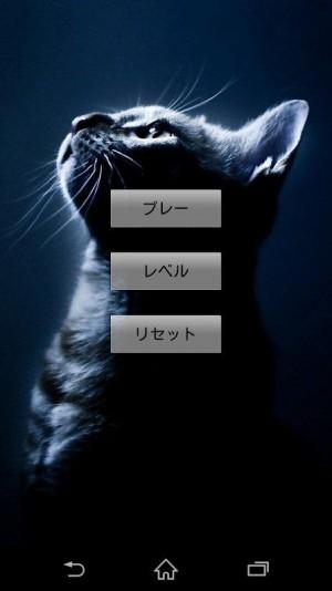 猫を見つける (6)