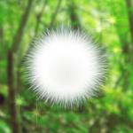 【攻略:ケサランパサラン – 不思議な生き物を育成してみませんか?】飼育方法